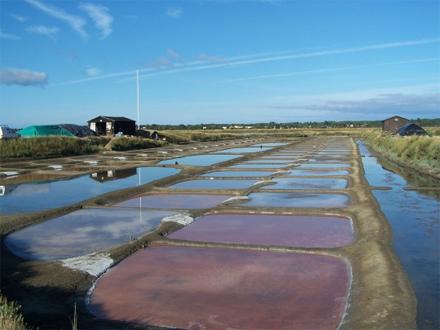 Marais Salants - Ile d'olonne - Vendée
